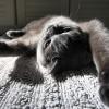 Кошка лежит на кровати