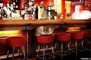 Кошка лежит за стойкой бара