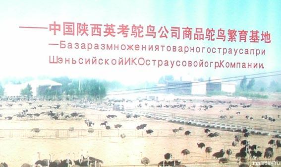 Китайская надпись на русском